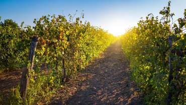 Wine and Culinary Tours